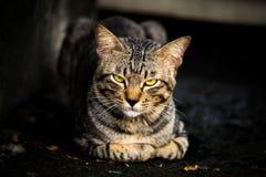 Porträt der Katze in der Dunkelheit beim Sitzen stockbild