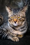Porträt der Katze mit Gelb stockfotos