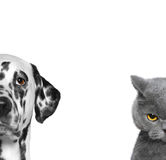 Porträt der Katze und des Hundes lokalisiert auf weißem Hintergrund Stockbild