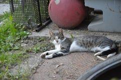 Porträt der Katzenaufstellung stockfotografie