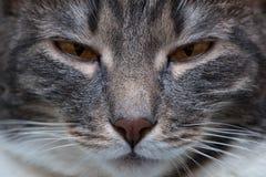 Porträt der mürrischen Katzennahaufnahme stockfotos