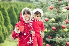 Porträt der Mutter und des Kindes, die nahe Weihnachtsbaum sitzen und Lebkuchen essen und trinkende heiße Schokolade im Kiefernpa Stockfotos