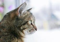 Porträt der netten nervösen Katze, die auf dem Fenster umgeben durch helle Kreise des Lichtes sitzt lizenzfreies stockfoto