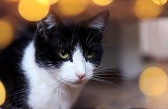 Porträt der netten nervösen Katze umgeben durch festliche Kreise des goldenen Lichtes lizenzfreie stockfotografie