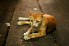 Porträt der obdachlosen Katze Stockfotografie