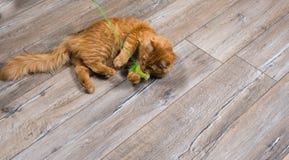 Porträt der roten Katze spielend mit Spielzeug Lizenzfreie Stockbilder