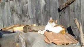 Porträt der schönen Katze auf ländlicher Hauslandschaft Stockfotografie