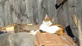 Porträt der schönen Katze auf ländlicher Hauslandschaft Stockbild