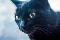 Porträt der schwarzen Katze Lizenzfreie Stockfotografie