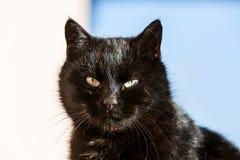 Porträt der schwarzen Katze Stockfoto
