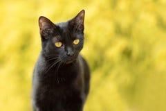 Porträt der schwarzen Katze Lizenzfreies Stockfoto