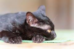 Porträt der schwarzen Katze etwas schauend Stockbild