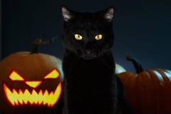 Porträt der schwarzen Katze mit Halloween-Kürbis auf Hintergrund Stockbilder