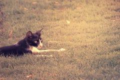Porträt der Schwarzweiss-Katze sitzend im grünen Gras im Juli 2017 Lizenzfreie Stockfotos