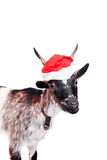 Porträt der zwergartigen Ziege im Weihnachtshut auf Weiß Stockfotografie