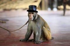 Porträt des Affen Stockbilder
