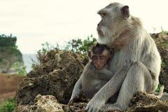 Porträt des Affen im Uluwatu Lizenzfreies Stockbild