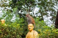 Porträt des Affen sitzend auf Hauptstatue des Mönchs Stockbilder
