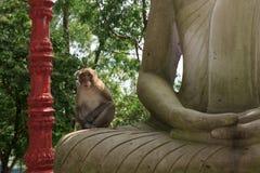 Porträt des Affen sitzend auf Statue von Buddha Lizenzfreie Stockfotografie