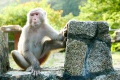 Porträt des Affen sitzt auf dem Felsen Stockbilder