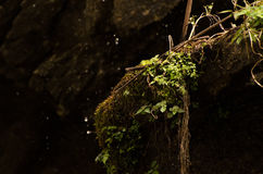 Porträt des Baums, Dharamshala, Indien Stockbilder