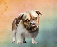Porträt des braunäugigen Hundes Lizenzfreies Stockbild