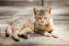 Porträt des Brauns musterte Katze auf altem hölzernem Lizenzfreie Stockfotografie