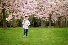 Porträt des entzückenden kleinen Jungen in einem Kirschblüten-Baumgarten, Stockbild