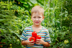Porträt des glücklichen Jungen reife Tomaten halten Lizenzfreie Stockfotos