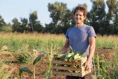 Porträt des glücklichen lächelnden jungen Landwirts, der Holzkiste mit Mais auf dem Feld hält stockbild