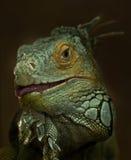 Porträt des grünen Leguans Lizenzfreies Stockbild