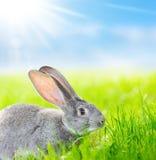 Porträt des grauen Kaninchens Stockfotos