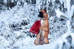 Porträt des Hundes im Hintergrund von Weihnachtsbäumen Stockbild