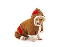 Porträt des Hundes im Renkostüm Lizenzfreies Stockbild