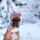 Porträt des Hundes im Rotwildkostüm gegen Hintergrund von Weihnachtsbäumen Lizenzfreie Stockfotos