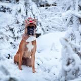 Porträt des Hundes in Sankt-Kostüm gegen Hintergrund von Weihnachtsbäumen Lizenzfreie Stockbilder