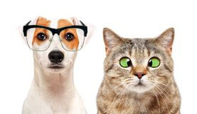 Porträt des Hundes und der Katze mit Augenkrankheiten lizenzfreie stockfotos