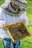Porträt des Imkers mit Bienenwabe Stockfotos