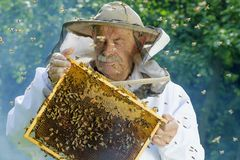 Porträt des Imkers mit Bienenwabe Stockbild
