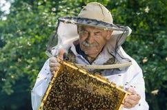 Porträt des Imkers mit Bienenwabe Lizenzfreie Stockfotografie