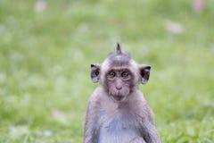 Porträt des jungen Affen seine Augen schielend Lizenzfreie Stockfotos