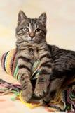 Porträt des Kätzchens der getigerten Katze mit einem Schal Stockbilder
