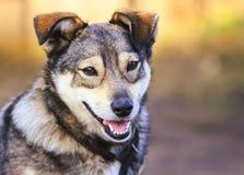 Porträt des lustigen Hundewelpen-Köterlächelns freundlich stockfotografie