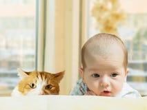 Porträt des lustigen kaukasischen neugeborenen Kleinkindbabys des Gesichtes mit roter Katze zu Hause Stockfotografie