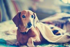 Porträt des lustigen kleinen Hundes Stockbilder