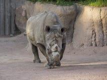 Porträt des Nashorns stockfoto
