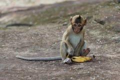 Porträt des netten Babyaffen, der Banane isst Lizenzfreie Stockbilder