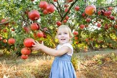 Porträt des netten kleinen blondy Babys, das Kamera betrachtet und reife pomegrate Früchte im Garten auswählt Ernte und Familie T stockfoto