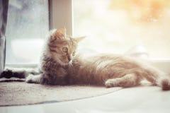 Porträt des netten kleinen Kätzchens der getigerten Katze, das auf dem Zementboden mit dem Sonnenlichthintergrund liegt stockbilder