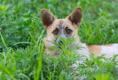 Porträt des netten kleinen Mischzuchthundes Stockbilder